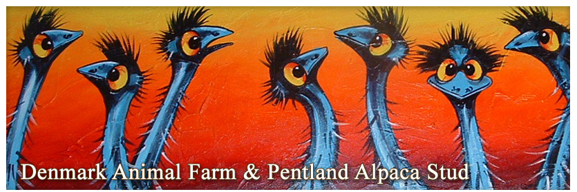 Pentland Alpaca Stud & Animal Farm - Shop